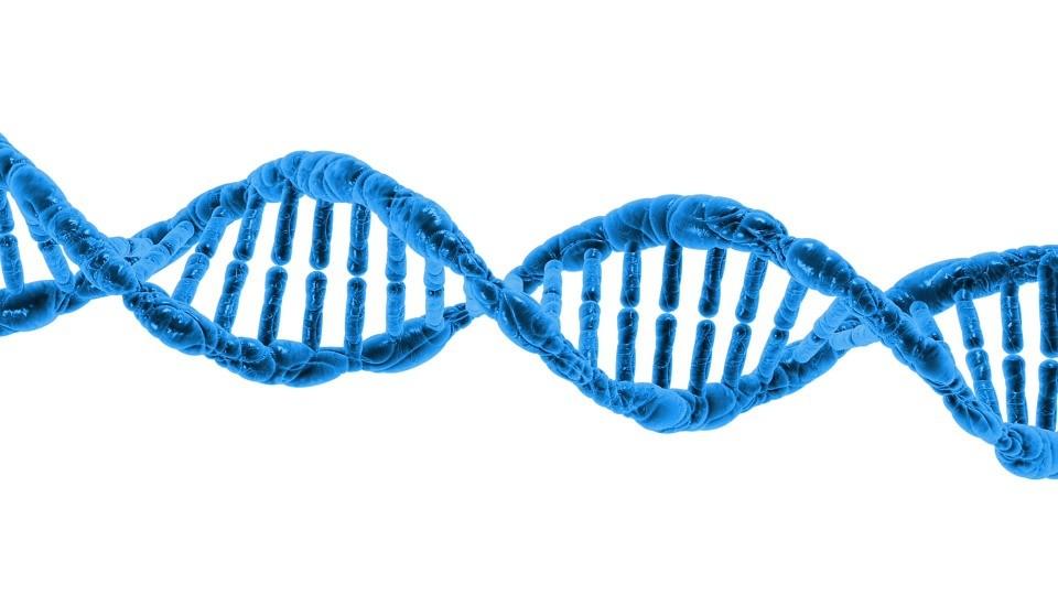 Improve your Digital DNA